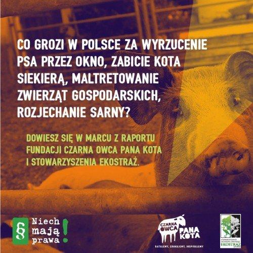 CzarnaOwca-NiechMajaPrawa-Zajawki-201601-P1c