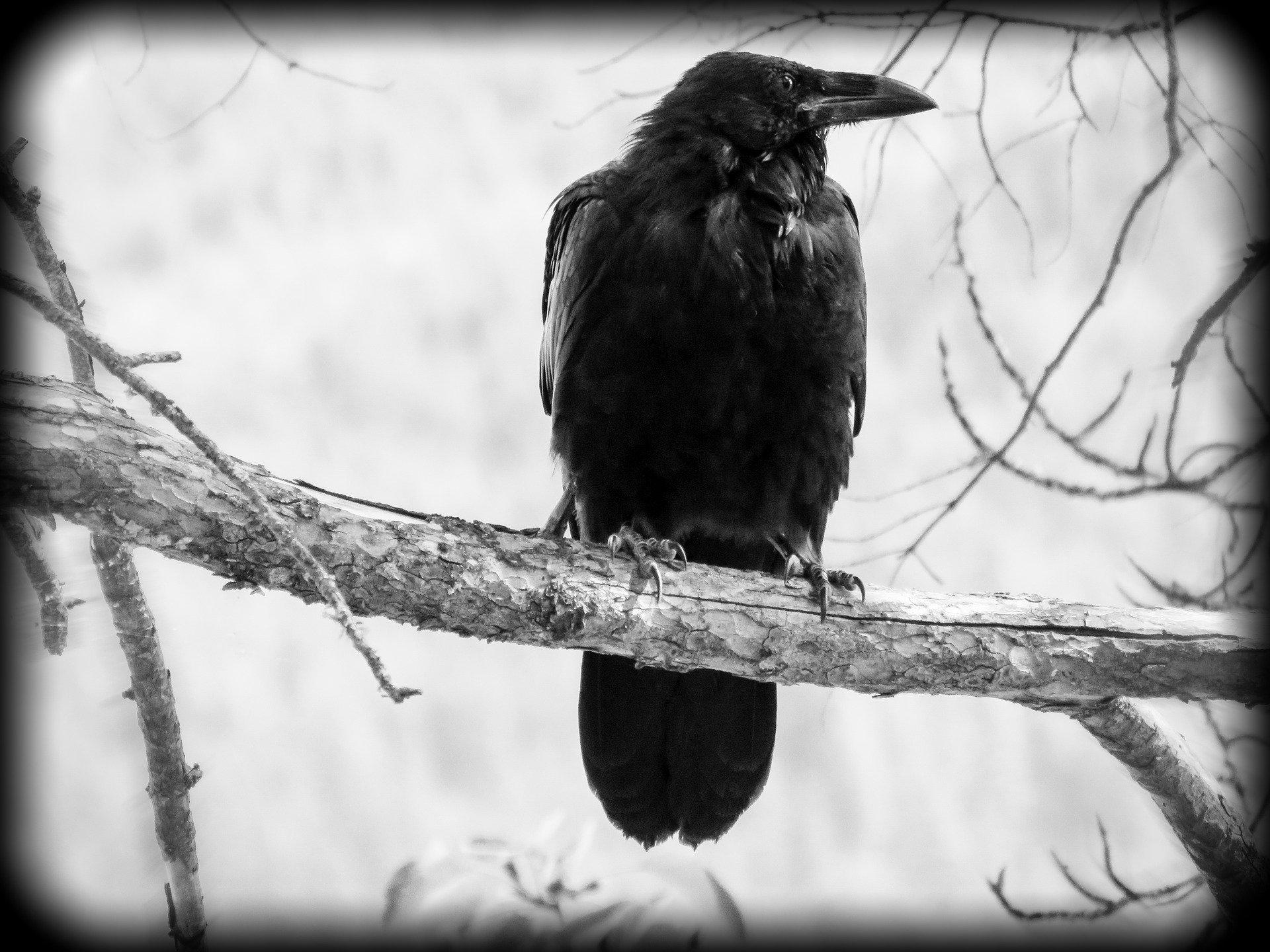 ptasi móżdżek – mity na temat zwierząt