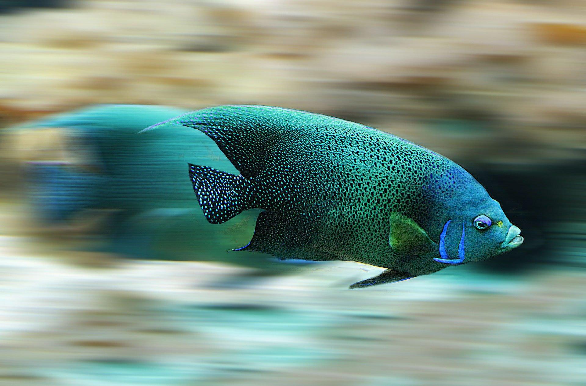 ryby są głupie – mity na temat zwierząt
