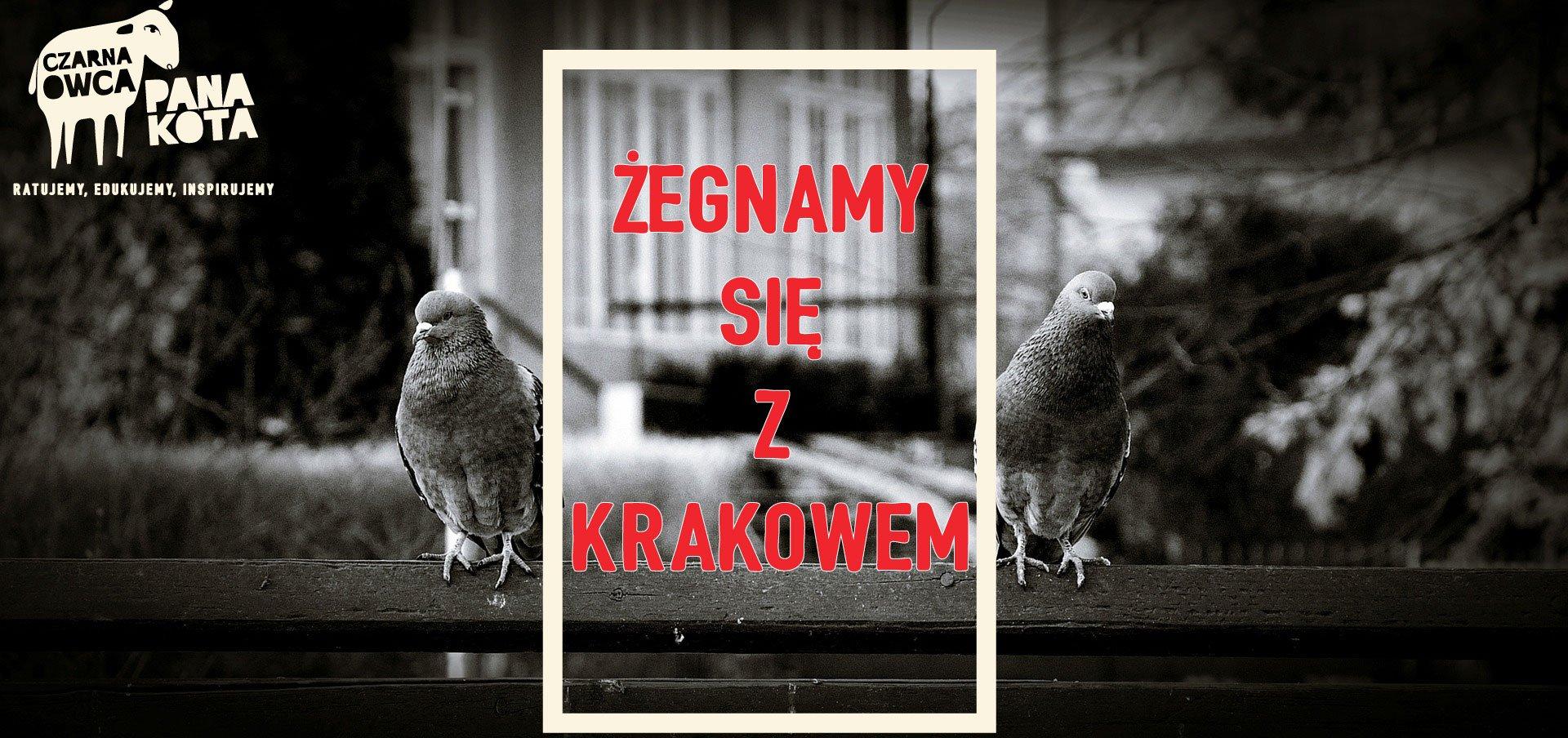 Czarna Owca Pana Kota żegna się z Krakowem