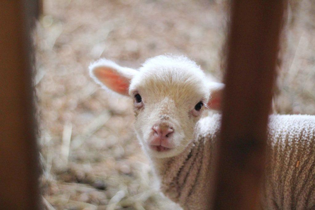 Zmieńmy Ustawę o ochronie zwierząt – podpisz petycję!