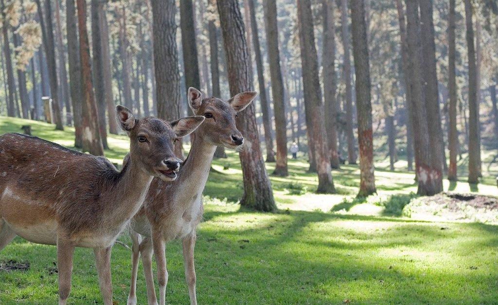 Już niedługo widok dzikich zwierząt może być historią dzięki staraniom ministra Szyszki i lobby myśliwsko-łowieckiego.