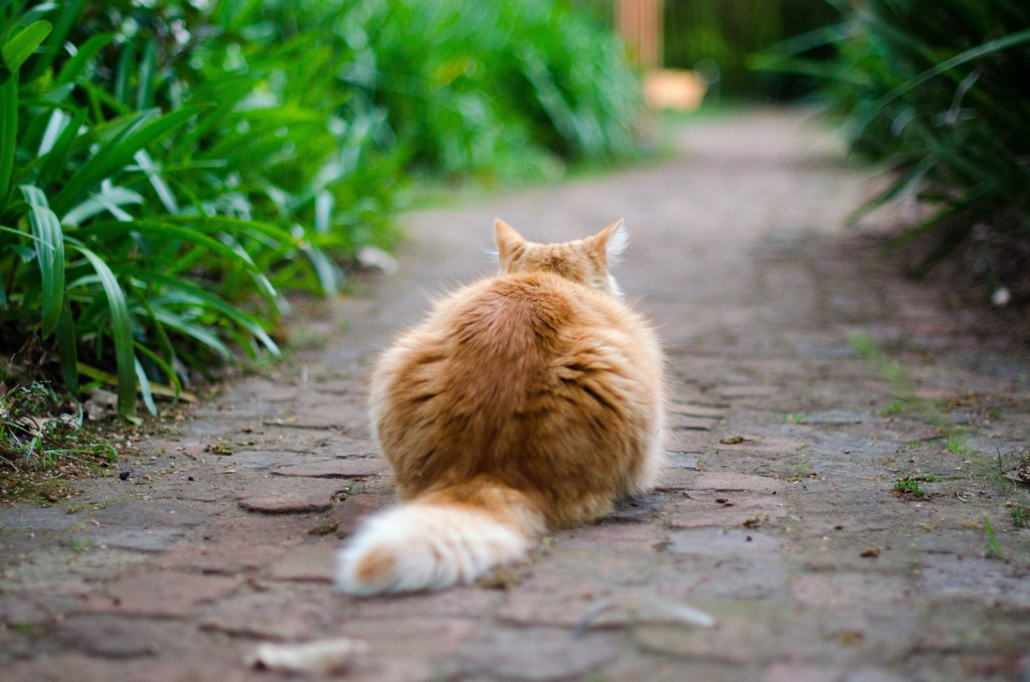 Koty zabijają ptaki, małe ssaki, gady i płazy.